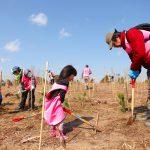 津波被害林復興の植林活動(千葉県山武市 蓮沼殿下海岸)